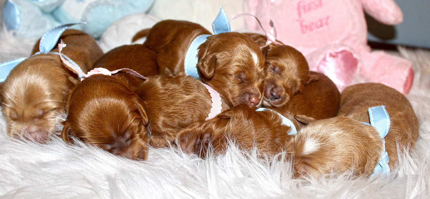 Memphis Belle and Holland Roger litter